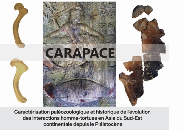 Annexe_Image_CARAPACE 2